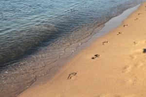 beach-88461_1920